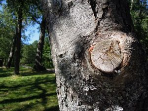 Cost Factors Of Tree Removal Job